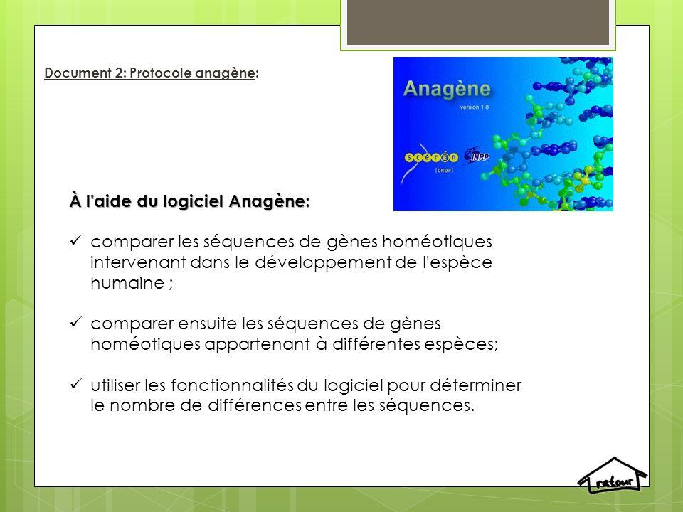 Document 2: Protocole anagène: À l'aide du logiciel Anagène: comparer les séquences de gènes homéotiques intervenant dans le développement de l'espèce