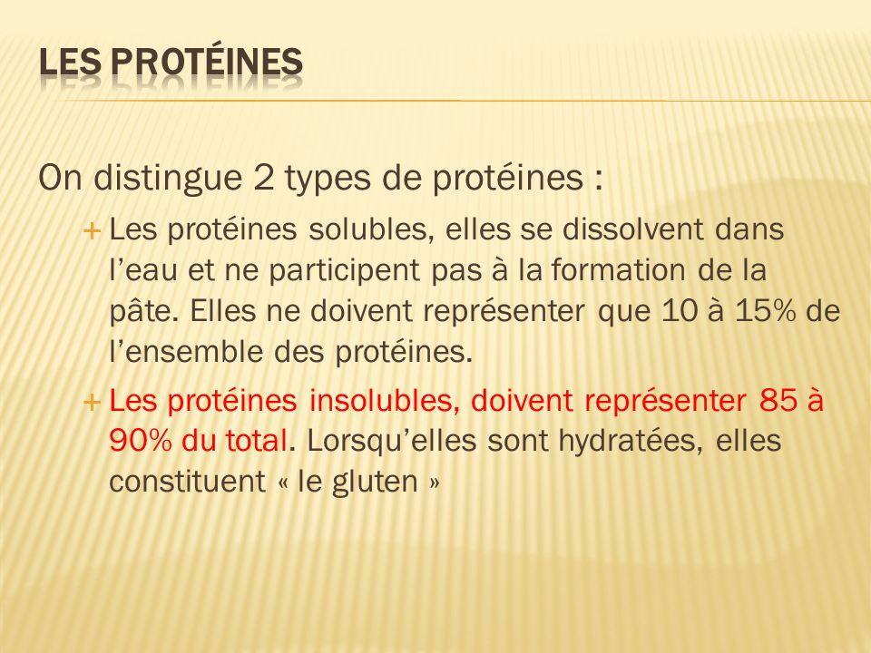 On distingue 2 types de protéines : Les protéines solubles, elles se dissolvent dans leau et ne participent pas à la formation de la pâte. Elles ne do