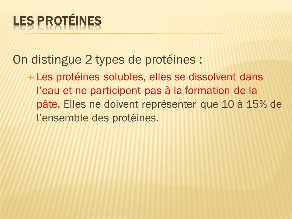 Les protéines solubles, elles se dissolvent dans leau et ne participent pas à la formation de la pâte.