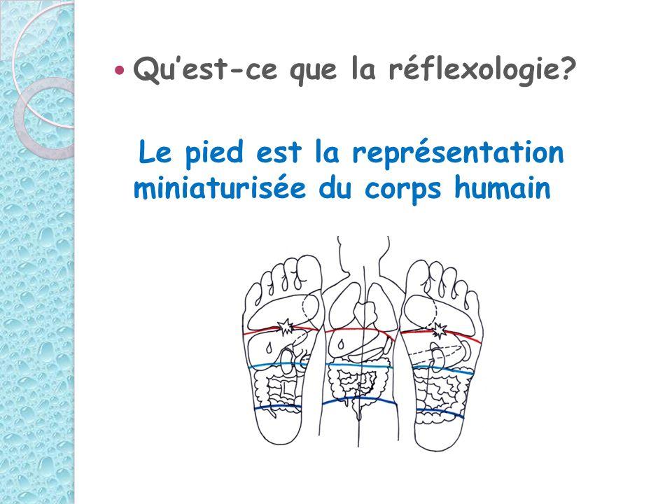 Quest-ce que la réflexologie? Le pied est la représentation miniaturisée du corps humain