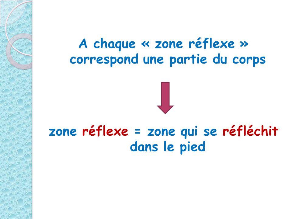 A chaque « zone réflexe » correspond une partie du corps zone réflexe = zone qui se réfléchit dans le pied