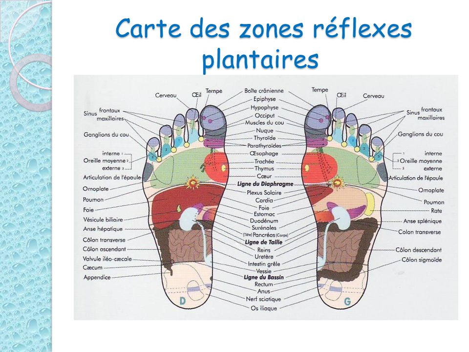 Carte des zones réflexes plantaires Carte des zones réflexes plantaires