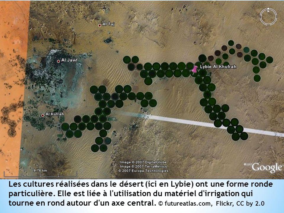 Les cultures réalisées dans le désert (ici en Lybie) ont une forme ronde particulière.