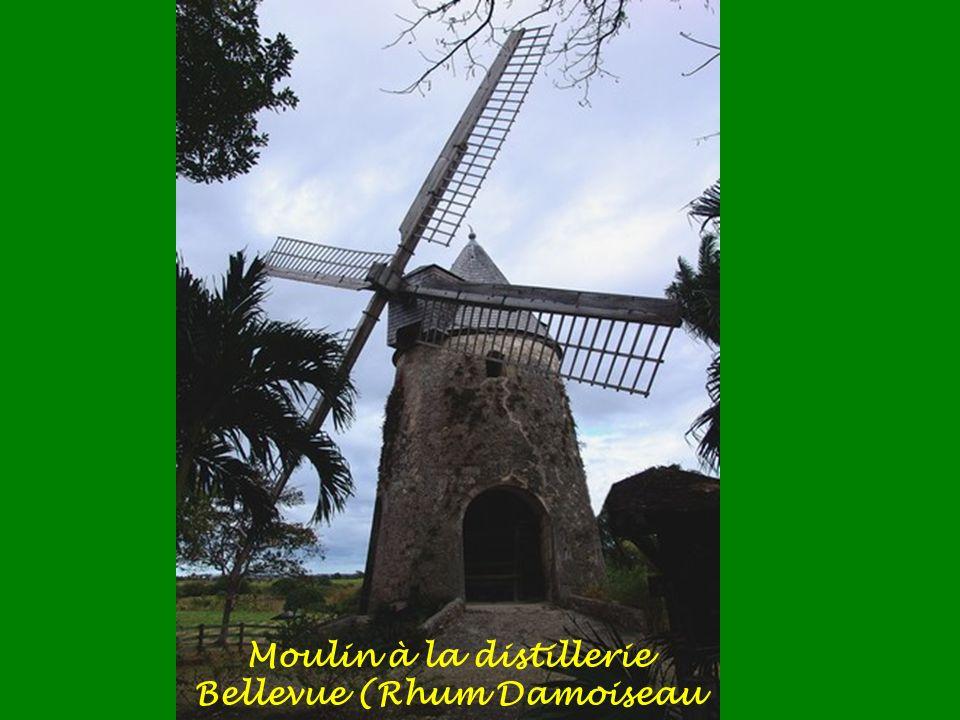 Moulin de Bonneveine à Anse-Bertrand