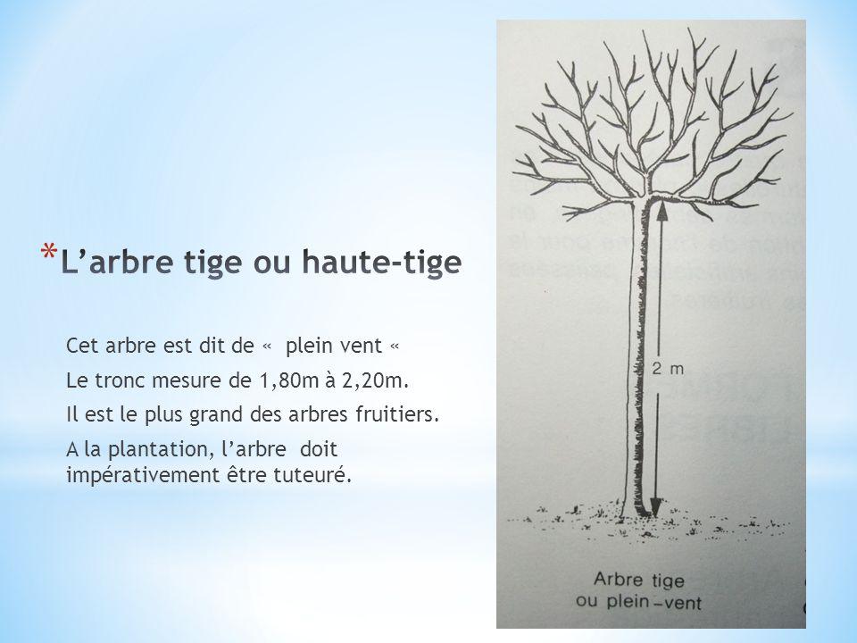Cet arbre est dit de « plein vent « Le tronc mesure de 1,80m à 2,20m. Il est le plus grand des arbres fruitiers. A la plantation, larbre doit impérati