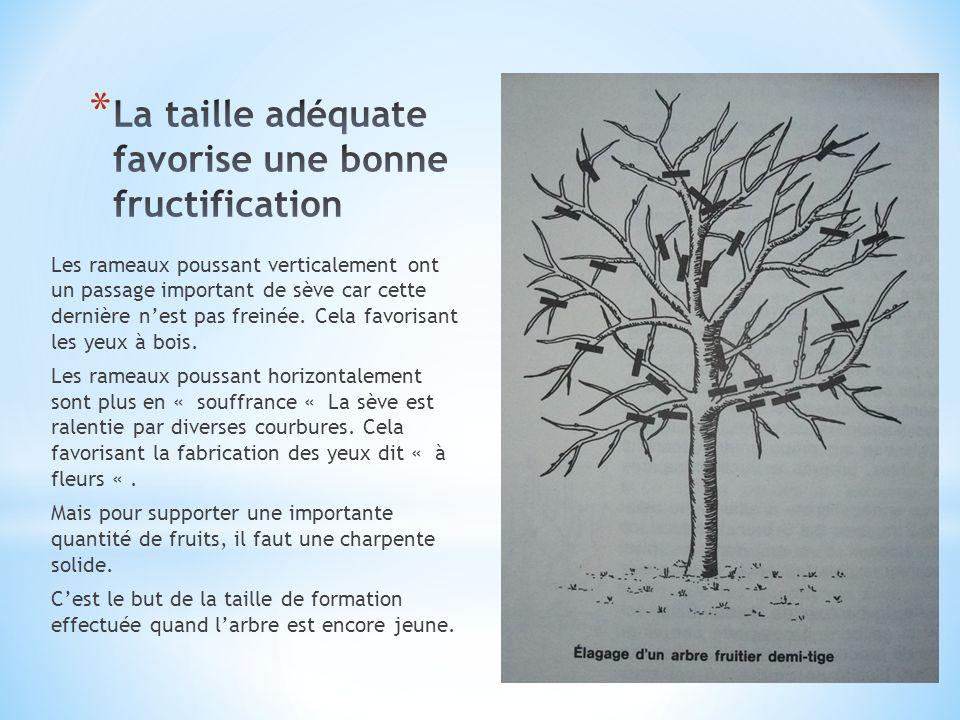 Il existe dautres types de tailles pour les arbres fruitiers mais ici sont représentées les principales que lon sera amené rencontrer.