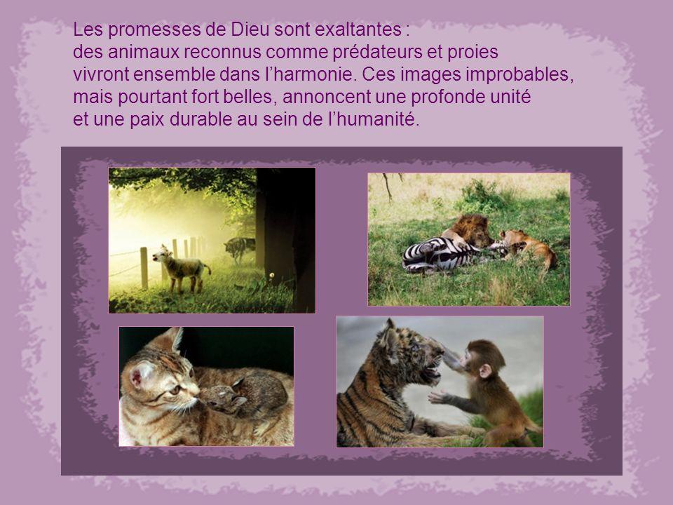 Les promesses de Dieu sont exaltantes : des animaux reconnus comme prédateurs et proies vivront ensemble dans lharmonie.
