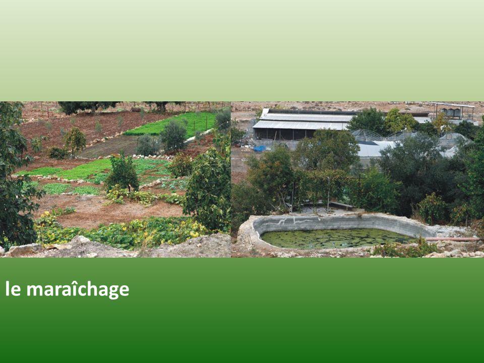 Wadi Fukin, le village Conséquence presque immédiate : Demain, un dépôt de matériel militaire, une construction quelconque seront le prétexte à linstauration dune zone de sécurité autour de ces terrains fermant laccès au fonds du vallon pour les agriculteurs palestiniens et remettant en cause la possibilité de cultiver et dentretenir les terrains qui ont fait lobjet du programme actuellement en cours (zone hachurée au contour vert).