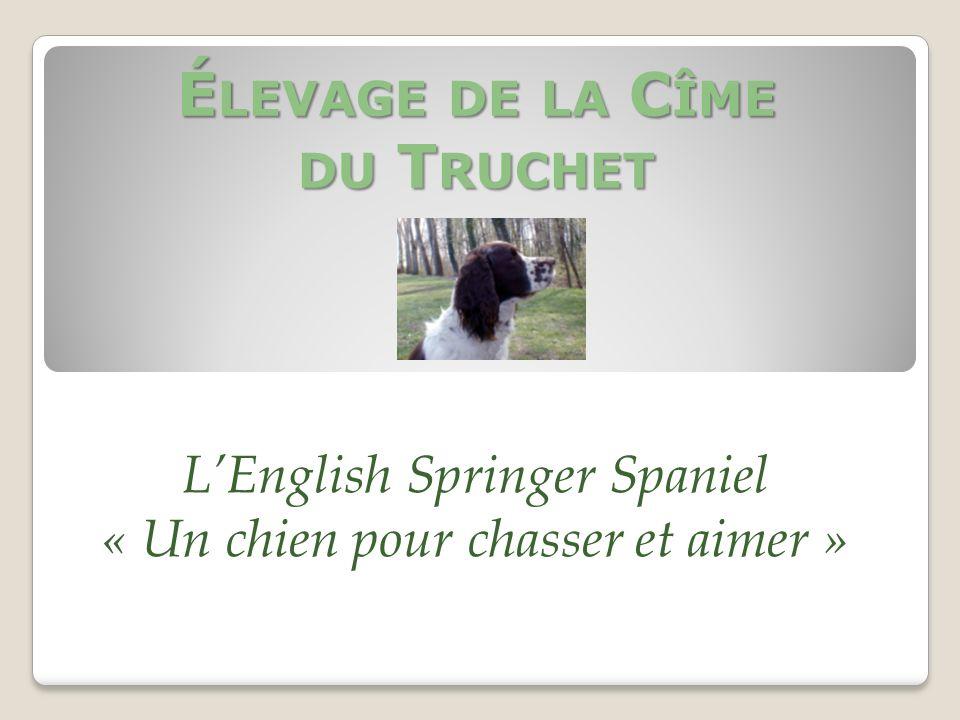 É LEVAGE DE LA C ÎME DU T RUCHET LEnglish Springer Spaniel « Un chien pour chasser et aimer »