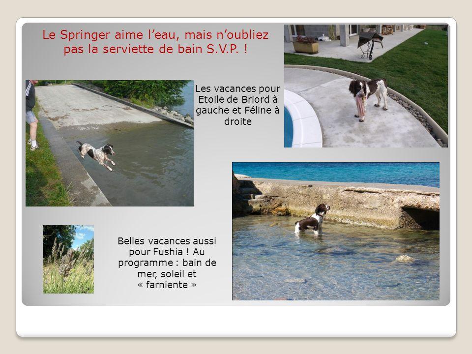 Les vacances pour Etoile de Briord à gauche et Féline à droite Belles vacances aussi pour Fushia ! Au programme : bain de mer, soleil et « farniente »