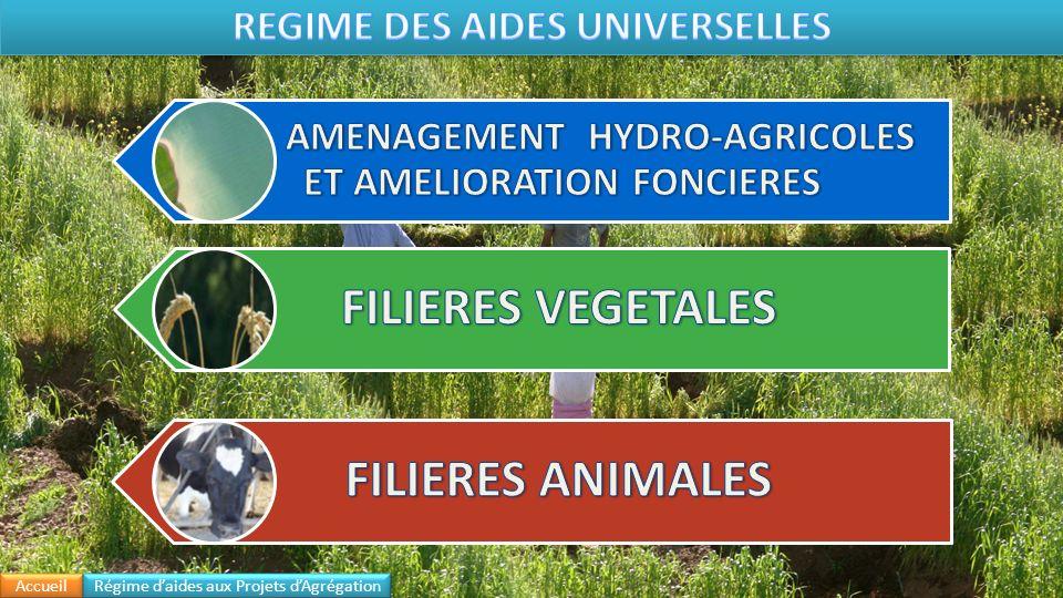 Objets Taux Ou Montant de la subvention Acquisition des plants certifiés dolivier et damandier, de plants certifiés ou communs de figuier, de caroubier, de pistachier, de noyer, de grenadier, de cerisier, de néflier, de pêcher, de nectarinier et de prunier (1) 80% Création de nouvelles plantations de palmier dattier (3) Plantations réalisées pour la densification et la réhabilitation des palmeraies 100 % Plantations réalisées pour lextension des palmeraies 80 % Création de vergers homogènes dolivier (2) Irrigué en goutte à goutte (Densité 300 Plants/Ha) durant les campagnes agricoles 2009/2010, 2010/2011 et 2011/2012 6.000 DH/Ha Irrigué en goutte à goutte (Densité 300 Plants/Ha) durant les campagnes agricoles 2012/2013 et 2013/2014 5.500 DH/Ha Irrigué en goutte à goutte (Densité300 Plants/Ha) à partir de la campagne agricole 2014/2015 5.000 DH/Ha Irrigué y compris le goutte à goutte (Densité < 300 Plants/Ha et 130 Plants/Ha ) 3.500 DH/Ha Bour (Densité 100 Plants/Ha) 3.500 DH/Ha Replantations fruitières Plantation après arrachage des plantations attaquées par le feu bactérien (4) - 12.000 DH/Ha pour lolivier - 15.000 DH/Ha pour pêcher, prunier, nectarier et cerisier Replantation dagrumes suite à une contamination par la tristeza 28.000 DH/Ha Création de nouvelles plantations dagrumes conduite en système dirrigation localisée 12.000 DH/Ha Accueil Régime daides aux Projets dAgrégation Régime des Aides Universelles Hydro-Agricole Filières Végétales Filières Animales
