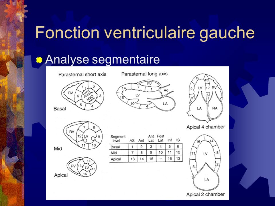 Fonction ventriculaire gauche Analyse segmentaire