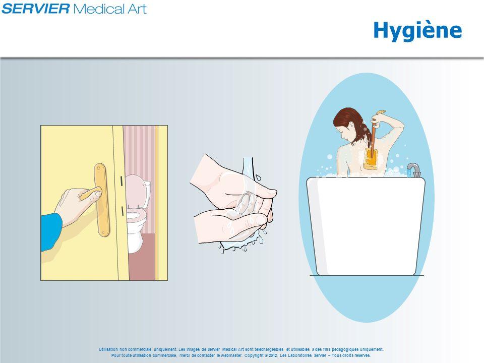 Utilisation non commerciale uniquement. Les images de Servier Medical Art sont téléchargeables et utilisables à des fins pédagogiques uniquement. Pour