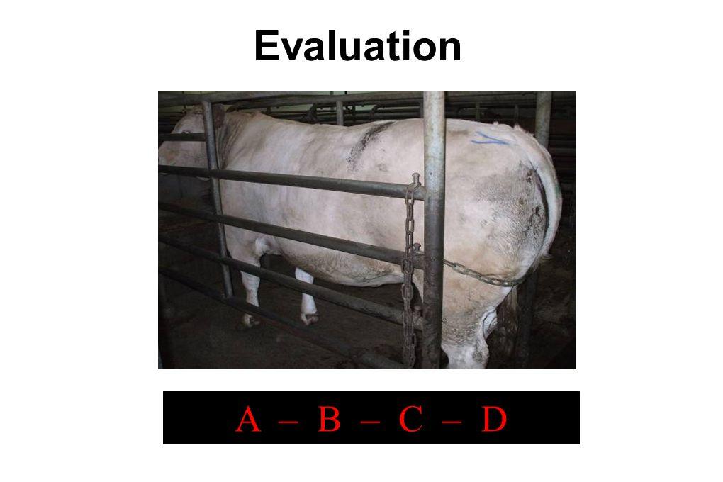 Evaluation A – B – C – D 1/25