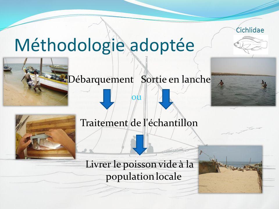 Méthodologie adoptée Cichlidae Débarquement Traitement de l'échantillon Livrer le poisson vide à la population locale Sortie en lanche ou
