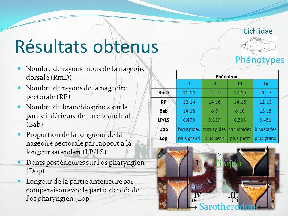 Résultats obtenus Nombre de rayons mous de la nageoire dorsale (RmD) Nombre de rayons de la nageoire pectorale (RP) Nombre de branchiospines sur la pa