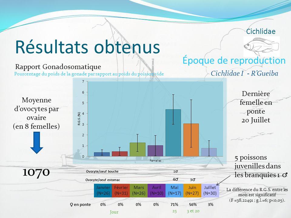 Résultats obtenus Cichlidae Époque de reproduction Janvier (N=26) Février (N=31) Mars (N=26) Avril (N=10) Mai (N=17) Juin (N=27) Juillet (N=30) Ovocyt