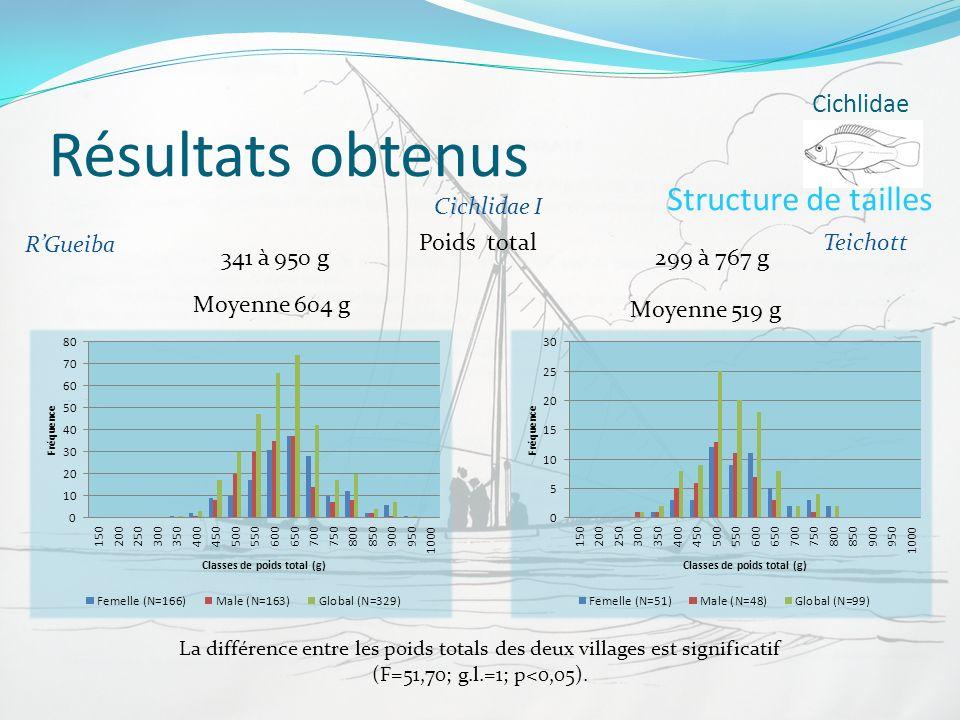 Résultats obtenus Cichlidae RGueiba Teichott Structure de tailles Poids total 341 à 950 g299 à 767 g Cichlidae I La différence entre les poids totals