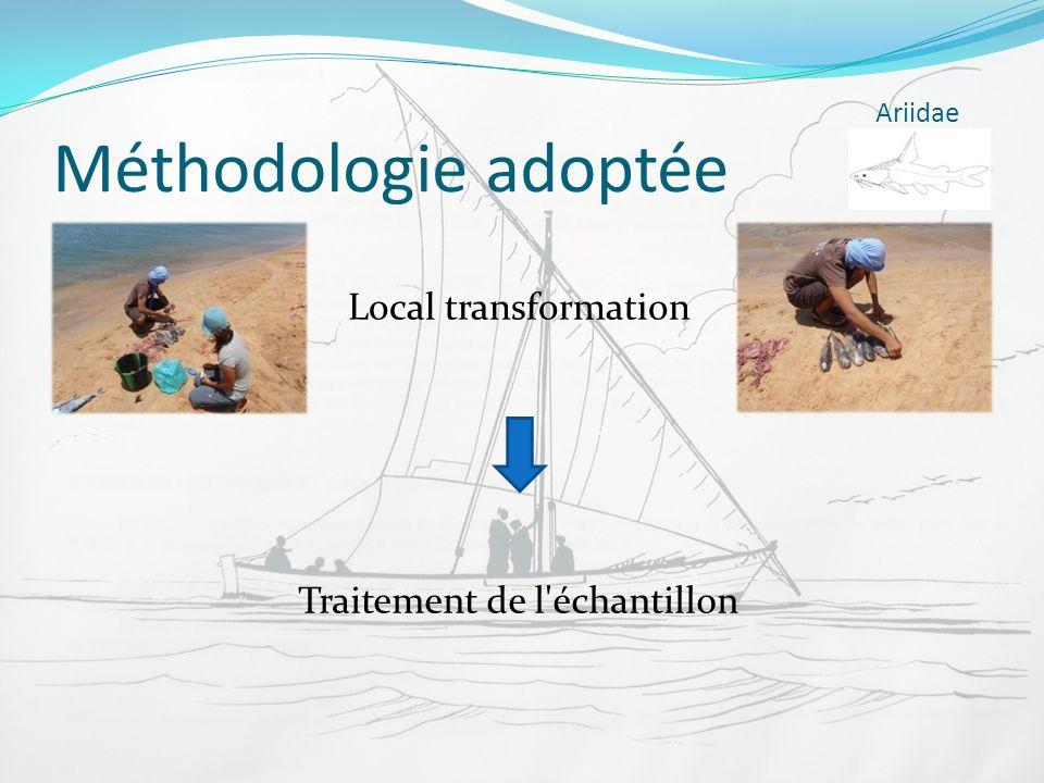 Méthodologie adoptée Local transformation Ariidae Traitement de l'échantillon