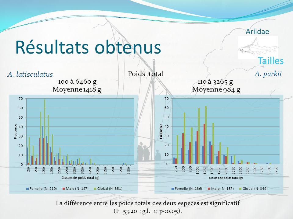 Résultats obtenus 100 à 6460 g Ariidae A. parkii A. latisculatus Poids total 110 à 3265 g Tailles Moyenne 1418 gMoyenne 984 g La différence entre les