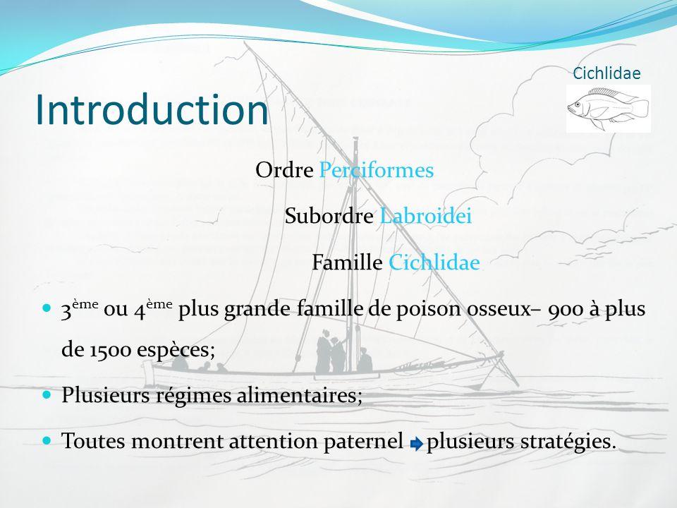Introduction Ordre Perciformes Subordre Labroidei Famille Cichlidae 3 ème ou 4 ème plus grande famille de poison osseux– 900 à plus de 1500 espèces; P