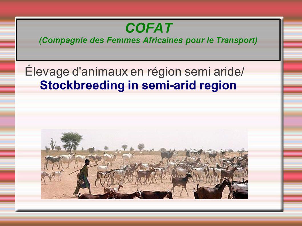 Élevage d animaux en région semi aride/ Stockbreeding in semi-arid region COFAT (Compagnie des Femmes Africaines pour le Transport)