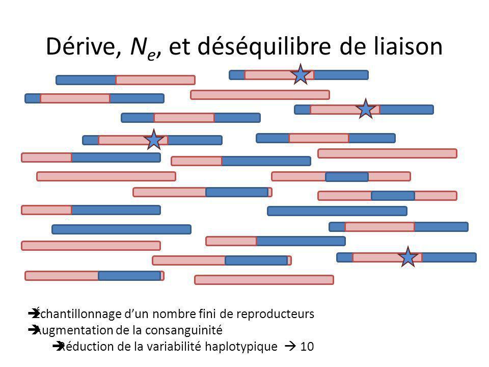 Dérive, N e, et déséquilibre de liaison Échantillonnage dun nombre fini de reproducteurs Augmentation de la consanguinité Réduction de la variabilité haplotypique 10