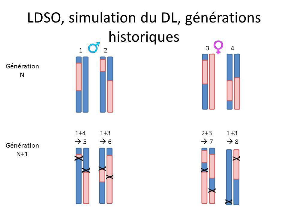 LDSO, simulation du DL, générations historiques 1 2 3 4 Génération N Génération N+1 12 34 1+4 5 2 1+3 6 χ χ 2+3 7 χ χ 1+3 8 χ χ χ χ