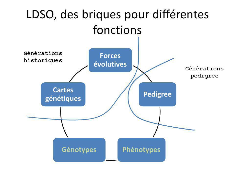 LDSO, des briques pour différentes fonctions Forces évolutives PedigreePhénotypesGénotypes Cartes génétiques Générations pedigree Générations historiques