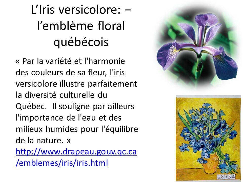LIris versicolore: – lemblème floral québécois « Par la variété et l'harmonie des couleurs de sa fleur, l'iris versicolore illustre parfaitement la di