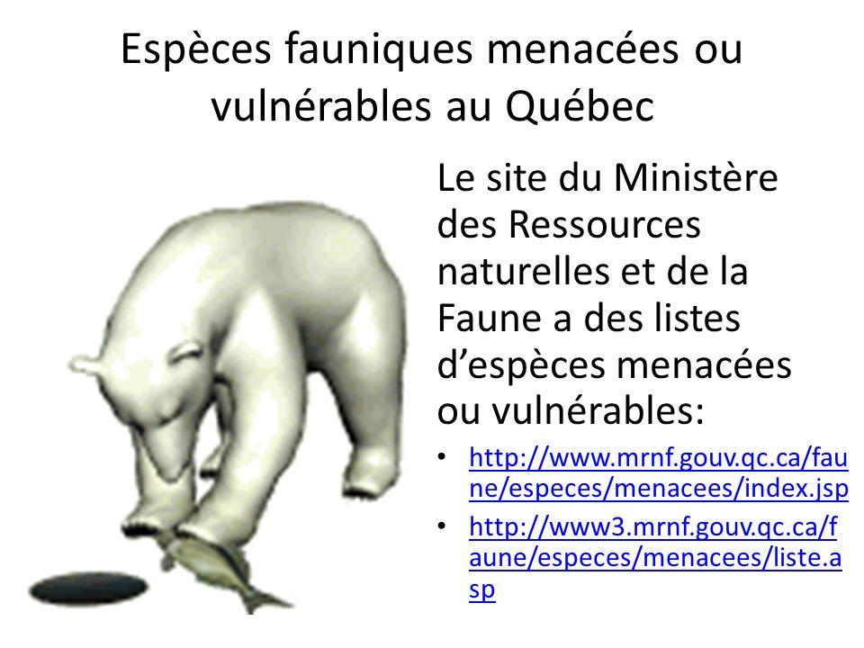 Espèces fauniques menacées ou vulnérables au Québec Le site du Ministère des Ressources naturelles et de la Faune a des listes despèces menacées ou vu