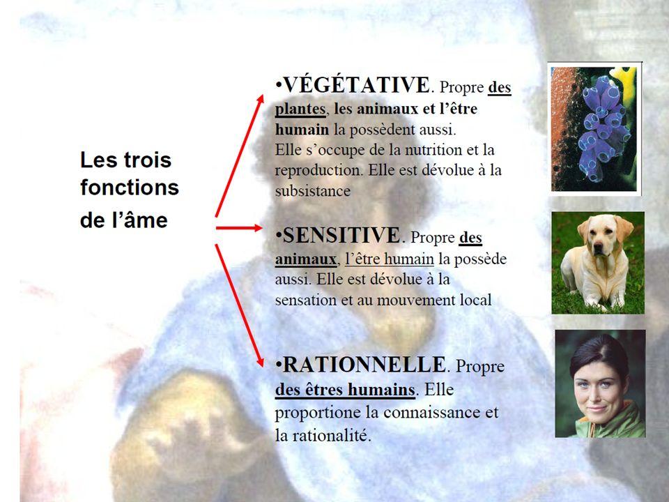 SOURCES Jacques Cuerrier « LÊtre humain Panorama de quelques grandes conceptions de l homme » Éditions McGraw-Hill 1990 Varios autores.