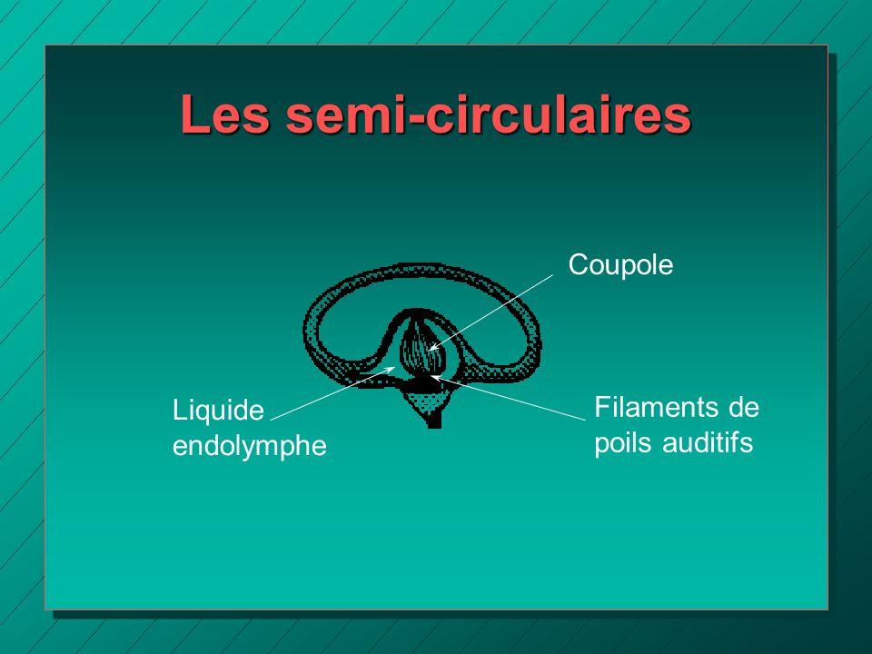 Les semi-circulaires Coupole Filaments de poils auditifs Liquide endolymphe
