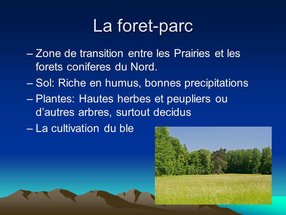 La foret-parc –Zone de transition entre les Prairies et les forets coniferes du Nord. –Sol: Riche en humus, bonnes precipitations –Plantes: Hautes her