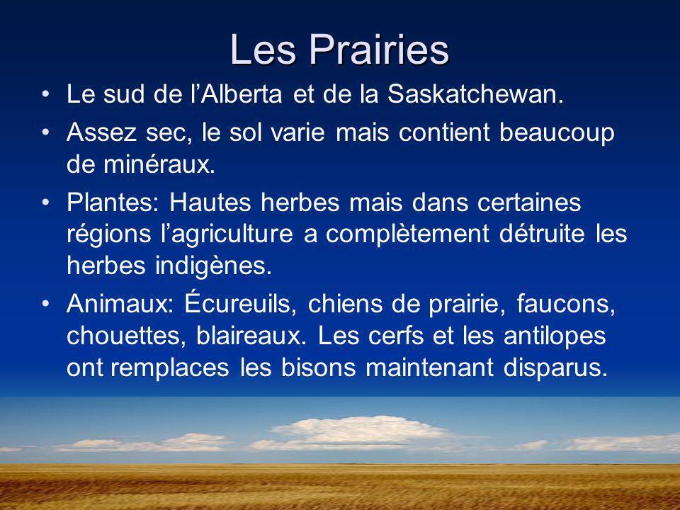 Les Prairies Le sud de lAlberta et de la Saskatchewan. Assez sec, le sol varie mais contient beaucoup de minéraux. Plantes: Hautes herbes mais dans ce