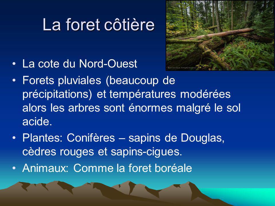 La foret côtière La cote du Nord-Ouest Forets pluviales (beaucoup de précipitations) et températures modérées alors les arbres sont énormes malgré le