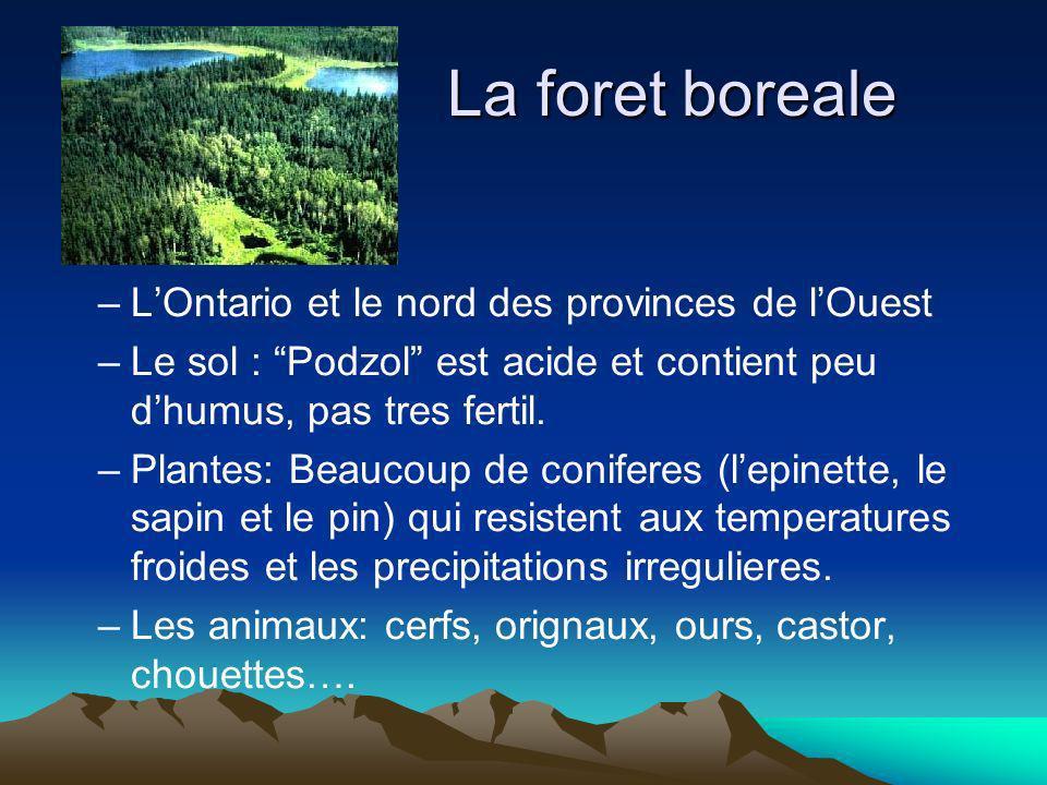 La foret boreale –LOntario et le nord des provinces de lOuest –Le sol : Podzol est acide et contient peu dhumus, pas tres fertil. –Plantes: Beaucoup d