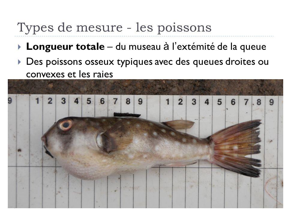 Types de mesure - les poissons Longueur totale – du museau à l extémité de la queue Des poissons osseux typiques avec des queues droites ou convexes et les raies