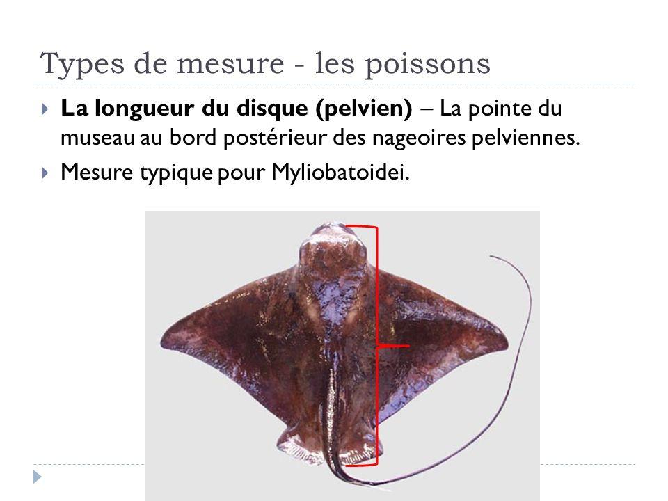 La longueur du disque (pelvien) – La pointe du museau au bord postérieur des nageoires pelviennes. Mesure typique pour Myliobatoidei. Types de mesure