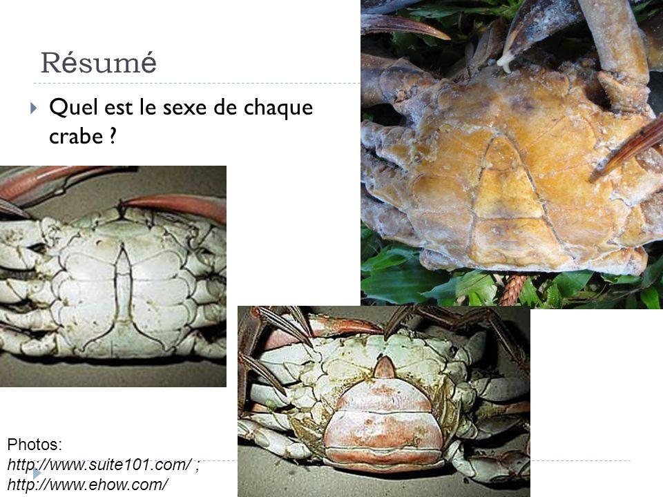 R é sum é Quel est le sexe de chaque crabe ? Photos: http://www.suite101.com/ ; http://www.ehow.com/