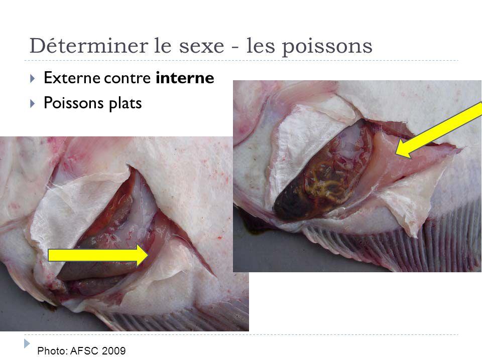 Externe contre interne Poissons plats Déterminer le sexe - les poissons Photo: AFSC 2009