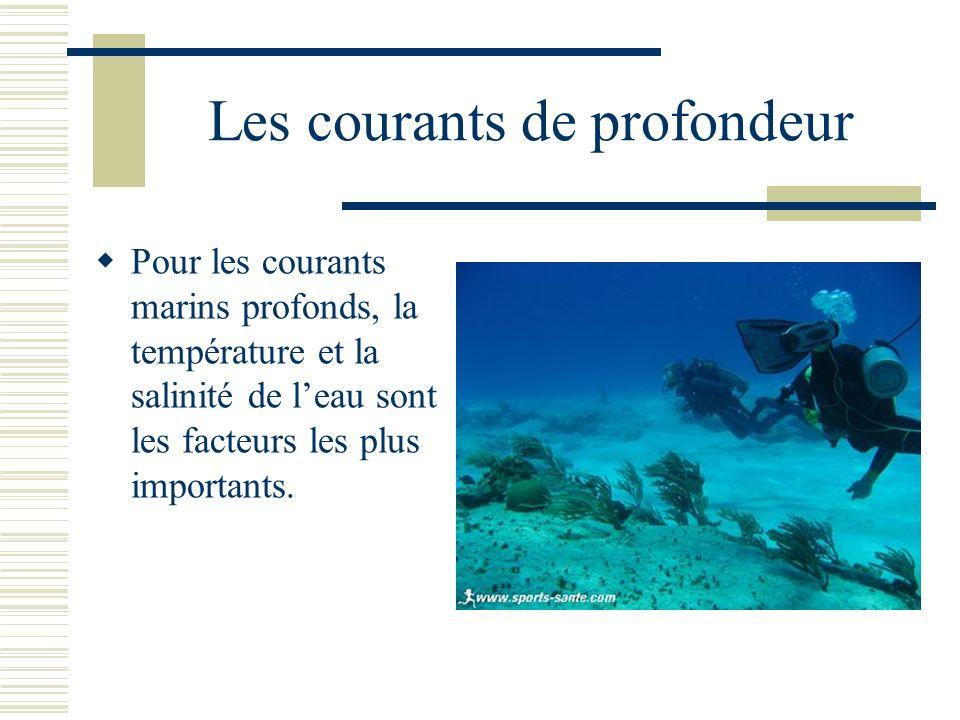 Les courants de profondeur Pour les courants marins profonds, la température et la salinité de leau sont les facteurs les plus importants.