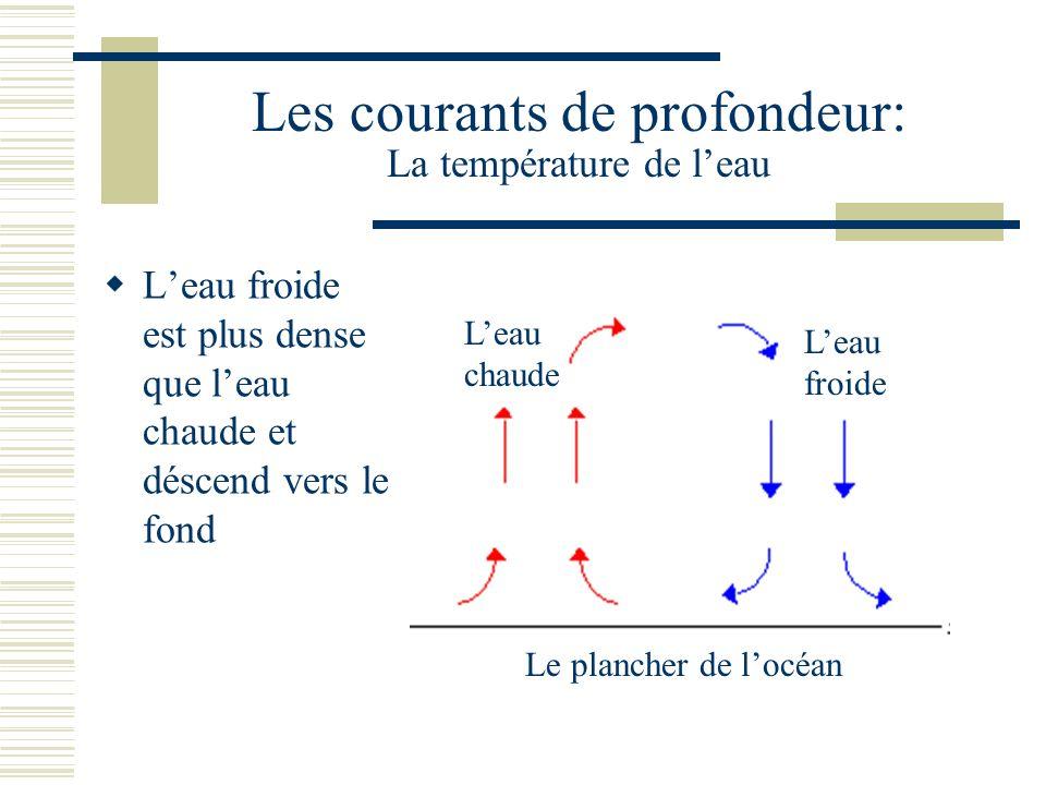 Les courants de profondeur: La température de leau Leau froide est plus dense que leau chaude et déscend vers le fond Leau chaude Leau froide Le plancher de locéan