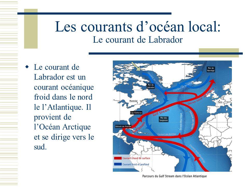 Les courants docéan local: Le courant de Labrador Le courant de Labrador est un courant océanique froid dans le nord le lAtlantique.