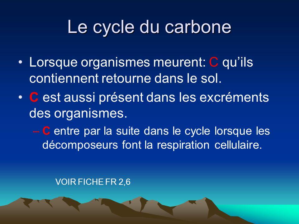 Le cycle du carbone Lorsque organismes meurent: C quils contiennent retourne dans le sol. C est aussi présent dans les excréments des organismes. –C e