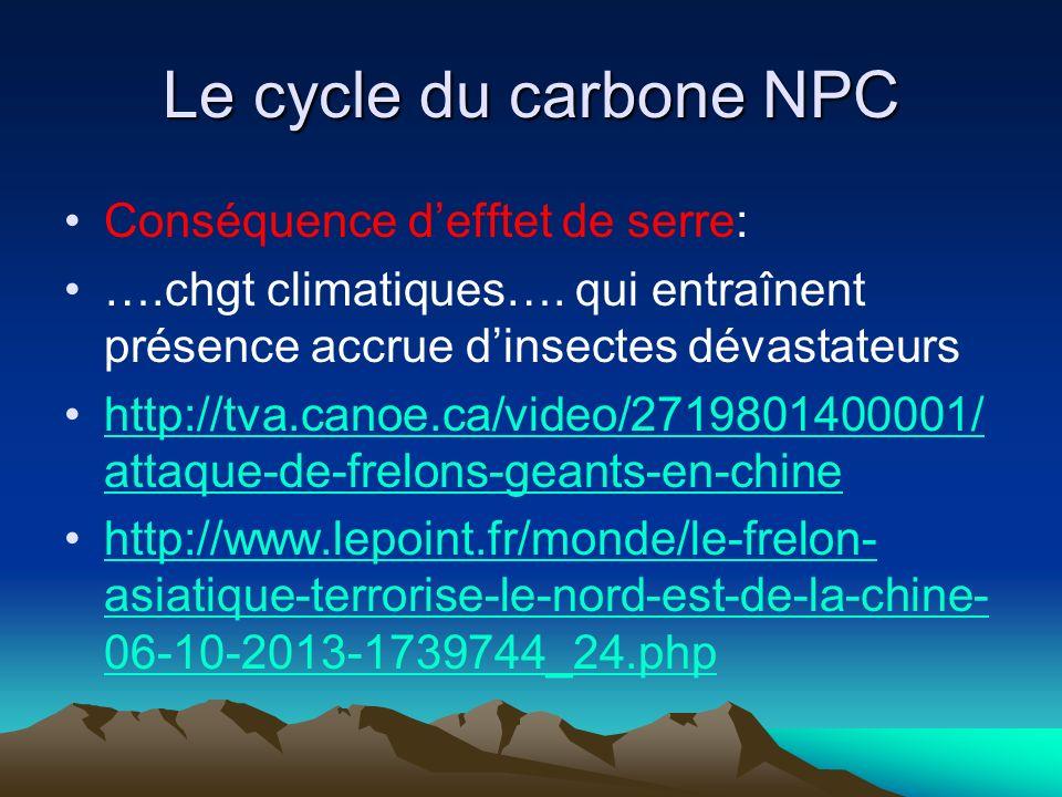 Le cycle du carbone NPC Conséquence defftet de serre: ….chgt climatiques…. qui entraînent présence accrue dinsectes dévastateurs http://tva.canoe.ca/v