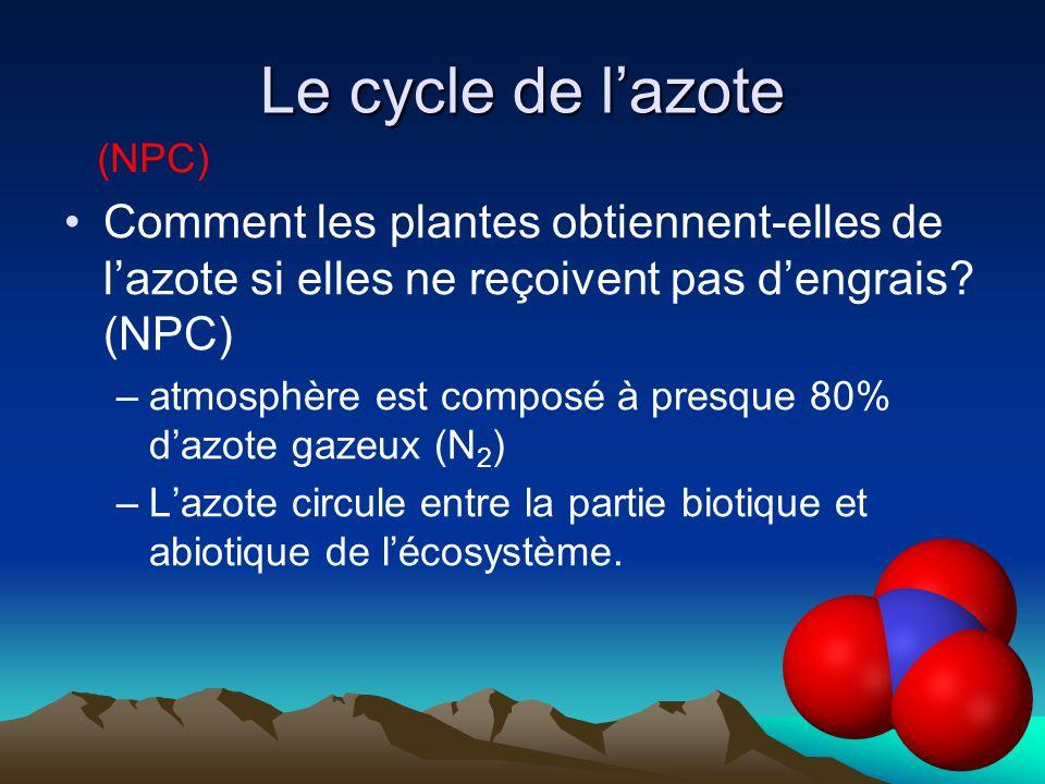 Le cycle de lazote Comment les plantes obtiennent-elles de lazote si elles ne reçoivent pas dengrais? (NPC) –atmosphère est composé à presque 80% dazo
