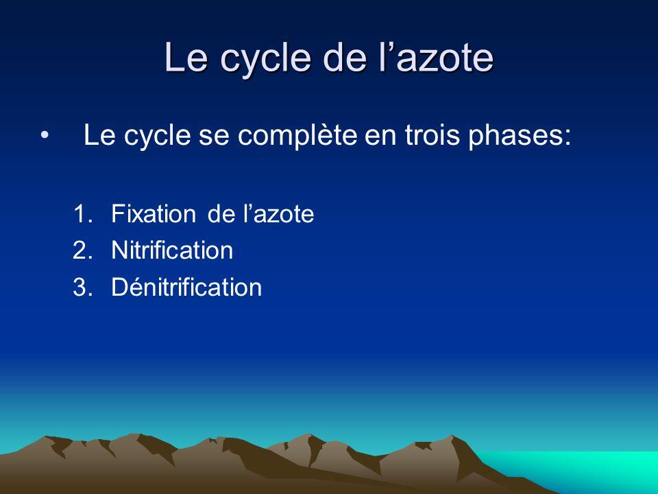 Le cycle de lazote Le cycle se complète en trois phases: 1.Fixation de lazote 2.Nitrification 3.Dénitrification
