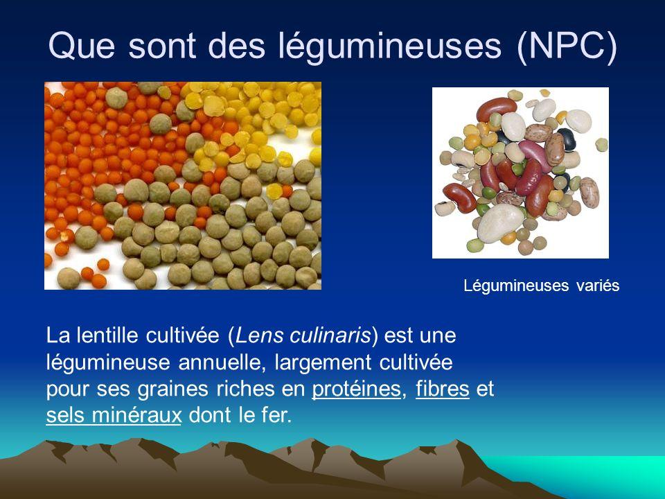 Que sont des légumineuses (NPC) La lentille cultivée (Lens culinaris) est une légumineuse annuelle, largement cultivée pour ses graines riches en prot
