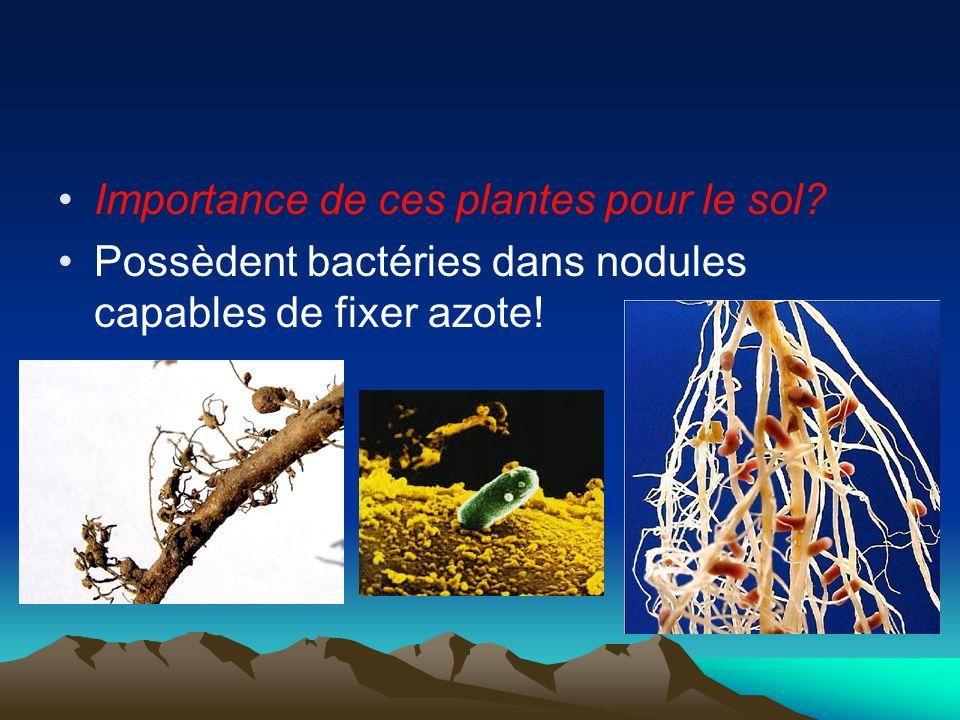 Importance de ces plantes pour le sol? Possèdent bactéries dans nodules capables de fixer azote!